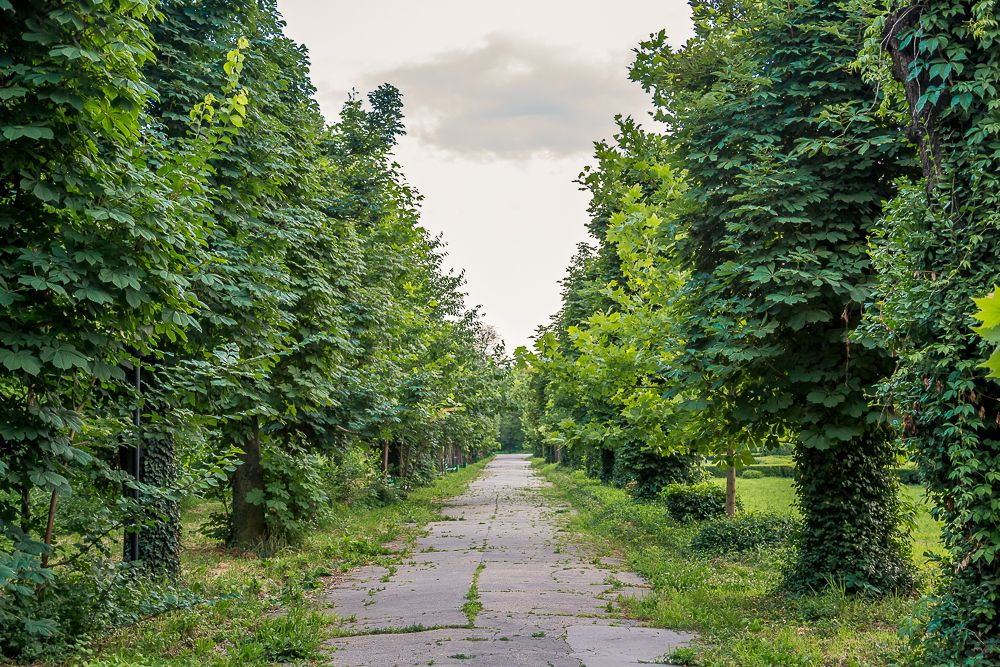 Gradina Botanica FOTO @Cristian Vasile 8