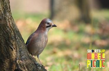 Ce (mai) facem la Marele Picnic: Birdwatching cu SOR